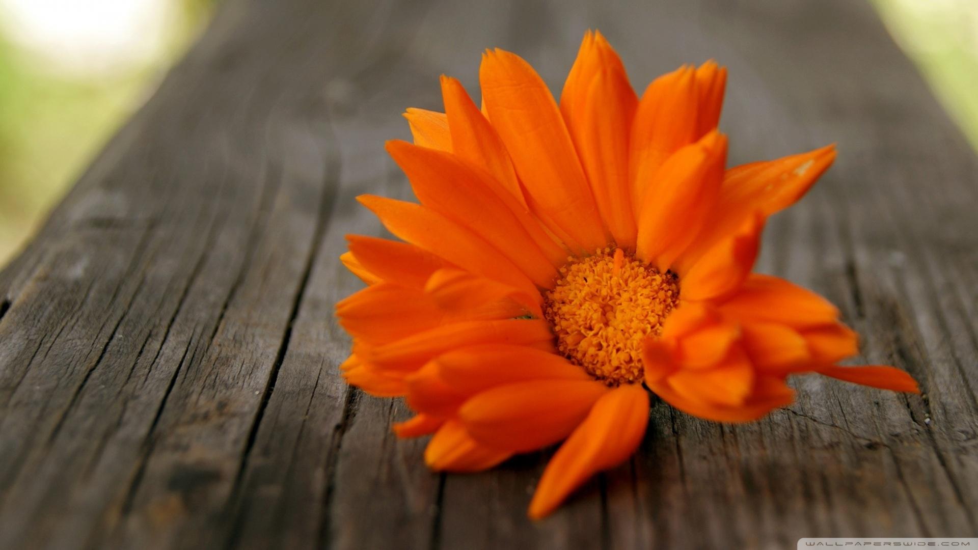 orange-flower-wallpaper1-1